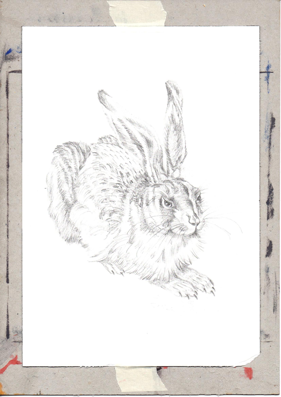 Young-Hare-by-Albrecht-Durer-jurita-2020-watercolor-ref094-19