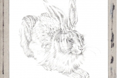 Young-Hare-by-Albrecht-Durer-jurita-2020-watercolor-ref094-19