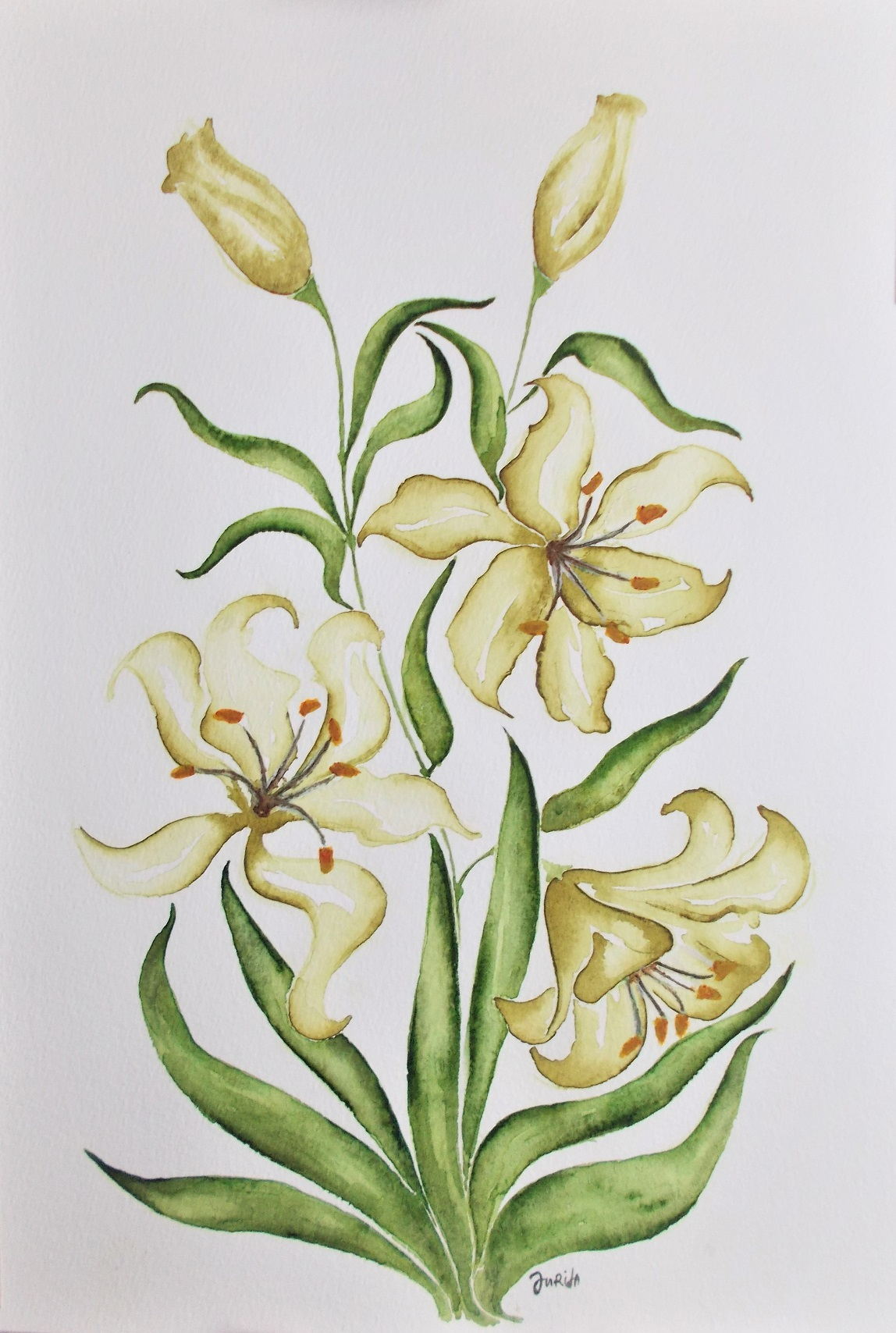 Asiatic_Lily_Electric_Yellow_watercolor_painting_sign_by_Jurita_Kalite_1