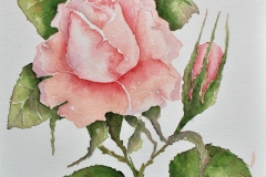 Light Pink Rose, Jurita Kalite, 2017, watercolor, 42 x 29 cm