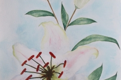 White Lilium_watercolor painting sign by Jurita Kalite 1