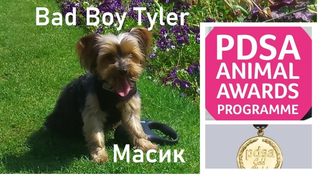 "17/04/2020 Nominate an animal Dog Bad Boy Tyler for a PDSA Commendation Award: ""For loyalty and bravery and devotion to her owner in the face of danger illness. For enriching the life of his owner by being a loyal and constant companion"""