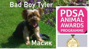 17/04/2020 Nominate an animal Dog Bad Boy Tyler for a PDSA Commendation Award